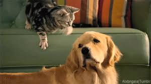 dog and cat friends gif. Unique And 2 U201c For Dog And Cat Friends Gif F