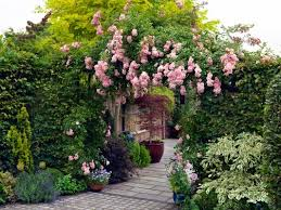 5 Of The Best Climbing Plants  Landscape Gardening SuppliesClimbing Plants