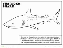 Small Picture Tiger Shark Worksheet Educationcom