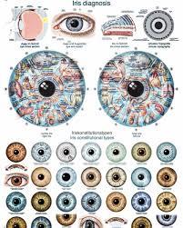 Iridology Diagnosis Chart Iridology Eye Chart Diagnosis 1