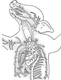 10750503020431eaf3663a9d601c3243 fetal pig dissection worksheet 1 high school lab pinterest on earthworm dissection lab worksheet answers