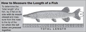 Northern Pike Age Chart Fishing Regulations Guide North Dakota Game And Fish
