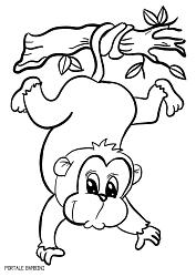 Disegni Di Scimmie Da Stampare E Colorare Gratis Portale Bambini