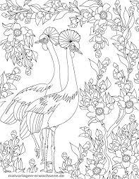 Kleurplaat Vogels Gratis Kleurpaginas Om Te Downloaden
