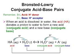 Bronsted Lowry Acids And Bases Worksheet Free Worksheets Library ...