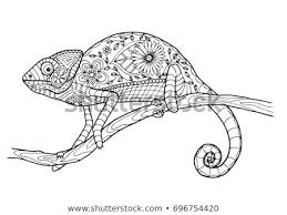 Color Coloring Page Adults Kids Chameleon Stock Vector Royalty Free