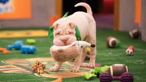 puppy bowl. Modren Puppy Animal Planet To Puppy Bowl