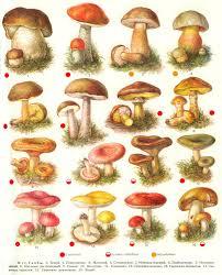 Урок онлайн Царство Грибы Современные уроки биологии Съедобные и несъедобные грибы Учебный рисунок