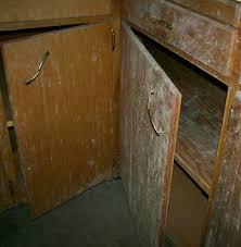 aspergillus mold on kitchen cabinets bethany ok