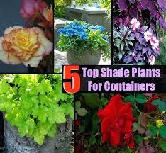 plants for shaded porch plants for shaded porch within patio plants for shaded areas best plants
