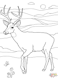 Small Picture White tailed Deer coloring page Free Printable Coloring Pages