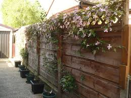 How To Grow Flowering Vines In Containers  HGTVWall Climbing Plants In Pots