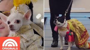 New York Pet <b>Fashion</b> Show's Most Stylish <b>Animals</b>   TODAY ...