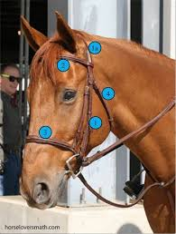 Measuring A Horse For A Bridle Training Techniques Horse