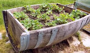 container gardening vegetables. Container Gardening Vegetables