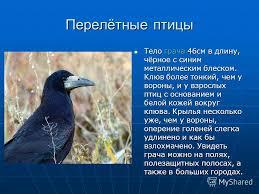 Презентация на тему Перелётные и зимующие птицы Работу выполнил  15 Перелётные