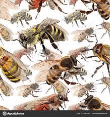 экзотические пчела диких насекомых шаблон в стиле акварели