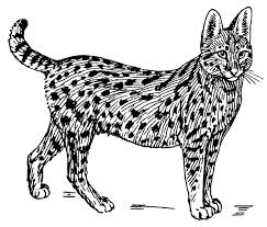 Small Picture Free Serval Coloring Pages Clipart Clipart Picture 1 of 1