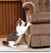 Scratching on Furniture A mon Behavior Even in Declawed Cats