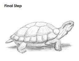 Small Picture How to Draw a Turtle Red Eared Slider Sketches Pinterest