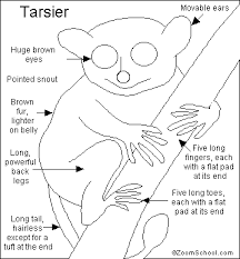Small Picture Tarsier Animal Coloring Pages nebulosabarcom