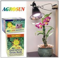 lighting indoor plants. light bulb for plants create a little patch of green anywhere in your lighting indoor g