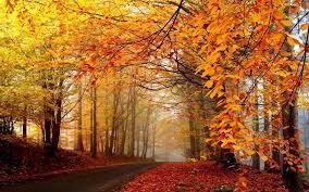 Free download Autumn Tumblr Background ...
