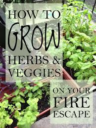 how to grow a herb garden. Share On Facebook How To Grow A Herb Garden