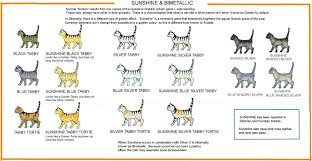 Sphynx Cat Color Chart Colour And Pattern Charts