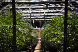 Tlry Shares Of Cannabis Firm Tilray Tlry Skyrocket On