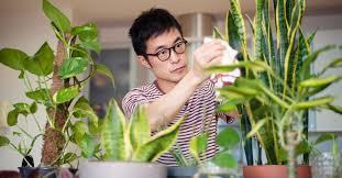 7 science backed benefits of indoor plants