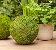 Decorating With Moss Balls Oversized Moss Balls Pottery Barn 19