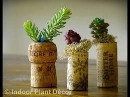 Superb Easy Indoor Plants   Easy Indoor Plants To Grow
