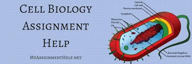 cell biology assignment help cell biology homework help cell biology assignment help