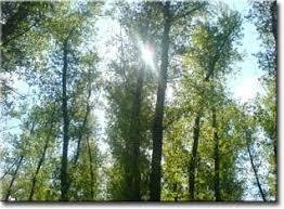 Сочинение на тему весна и её описание Описание приход весенней поры