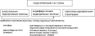 Реферат Адаптация человека к условиям среды обитания ru Принципы гуморальной регуляции