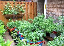 Kitchen Gardening For Beginners Fall Vegetable Garden Ideas Fall Container Gardening Ideas Nice