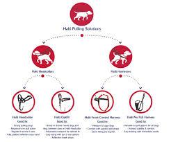 Halti Company Of Animals
