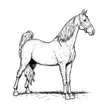 Kleurplaat Van Een Paard Printen Leuk Voor Kids
