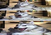 Pun Husky | Pun Dog | Know Your Meme via Relatably.com