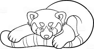 Small Picture Coloring Pages Little Cute Red Panda stock vector art 596793998