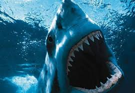 shark attack wallpaper. Contemporary Shark Shark Attack For Attack Wallpaper H