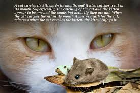 Cat Quotes Simple Quotes By Srila Prabhupada On A Cat Carrying Kittens And R Flickr