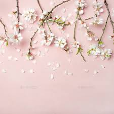 light pink background. Interesting Light Spring Almond Blossom Flowers Over Light Pink Background Square Crop Stock  Photo By Sonyakamoz Throughout Light Pink Background
