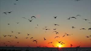 birds flying in the sky tumblr. Modren Tumblr Lot Of Birds Flying Against Stock Footage Video 100 Royaltyfree 2736539   Shutterstock And In The Sky Tumblr T