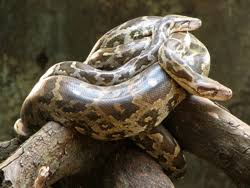 the night before i spoke at the conference i had a dream of a threshold with an open door at the threshold there was a python snake that attempted to