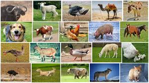 real farm animals collage. Modren Animals Farm Animals Name And Sound  Kids Fun Educational Learning Video  Old  MacDonald YouTube In Real Collage F