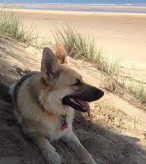 A Tribute to Ivy Jones | Freshfields Animal Rescue
