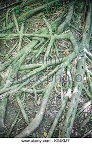 fertile garden. Roots In The Fertile Garden. - Stock Photo Garden