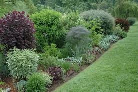 Small Picture Plain Garden Shrubs Wet Clay And Short Shrubsflowering To Design